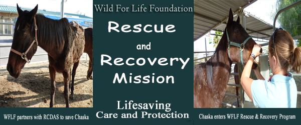 Chaska enters WFLF Rescue & Recovery Program