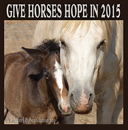 Give Hope to Horses