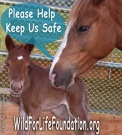 Help Keep Them Safe