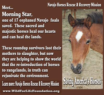 orphan horse full movie free