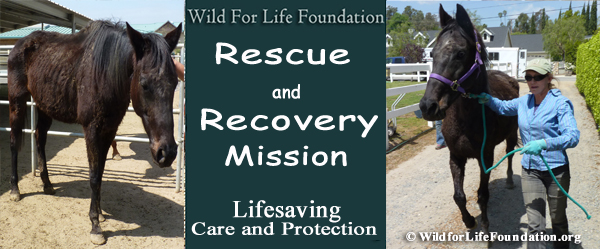 Lifesaving Rescue and recovery Mission
