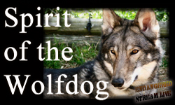 sPIRIT OF THE wOLFDOG