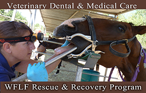 WFLF Vet Medical and Dental Care