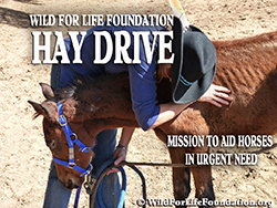 Donate to the Hay Drive