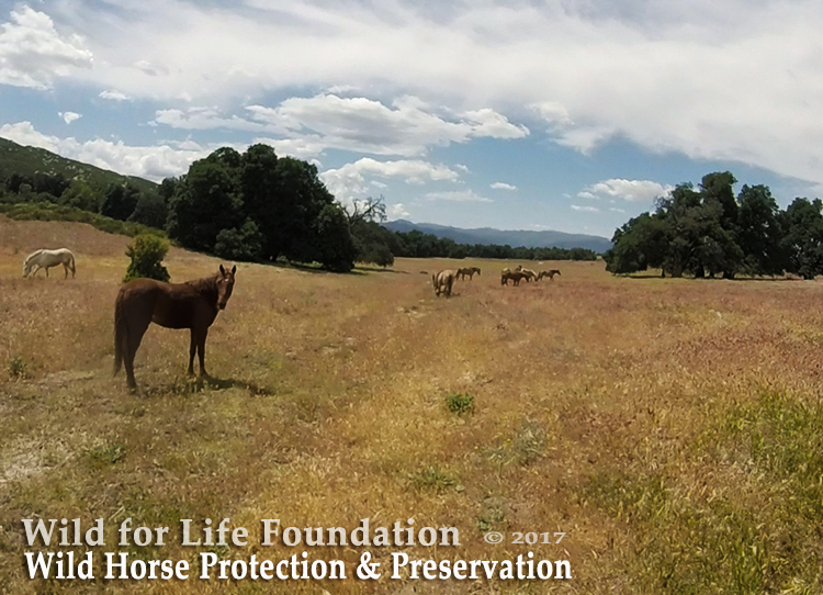 Wild Horse Protection