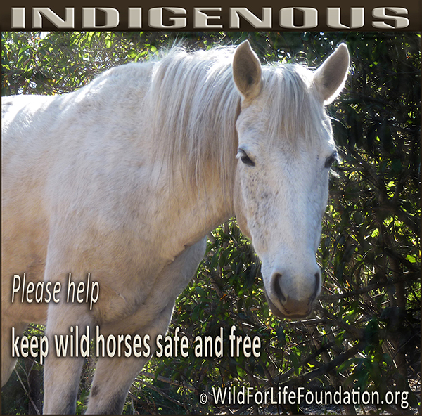 Indigenous wild safe and free