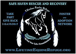 Join the Safe Haven Rescue and Recovery Program
