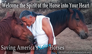 Welcome the spirit of the Horse into Your Heart