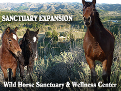 Sanctuary Expanion Project